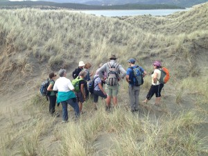 Botanising spinifex dunes at Port Waikato